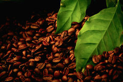 Coffee Beans And Green Leaf Royalty Free Stock Photo