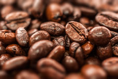 Coffee beans. Arabic coffee beans detail backround Stock Photography