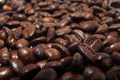 Coffee beans, arabica texture Stock Image