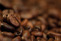 Coffee beans background. Closeup of coffee beans, brown food background stock photography
