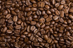 Coffee beans background. Perfect roasted coffee beans background Stock Photos