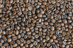 Coffee beans. Background. Coffee beans of Arabica. Background royalty free stock photography