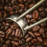 Coffee, Beans, Beverages, Roasting Royalty Free Stock Images
