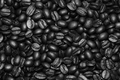 Coffee beans black and white background Royalty Free Stock Image