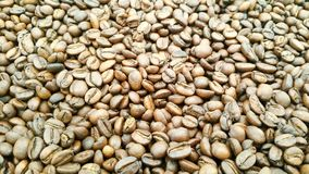 Coffee beans are roasted. Coffee beans brown and dark brown wallpaper from Chiang Mai, Thailand Royalty Free Stock Image