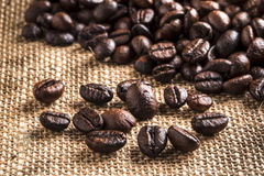 Coffee beans and brown wall. 1 Stock Image