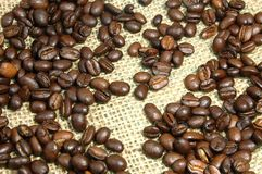 Coffee beans on burlap. Brown coffee beans on burlap which can be use as background Stock Image