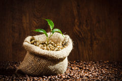 Coffee beans on burlap sack with metal scoop Royalty Free Stock Photography