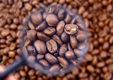 Coffee beans cafe Royalty Free Stock Photography