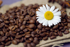 Coffee beans with chamomile Stock Photos
