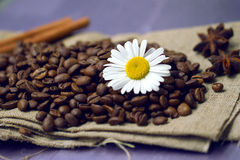 Coffee beans with chamomile Royalty Free Stock Photo