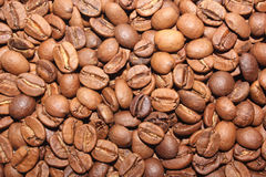 Coffee beans close-up Stock Images