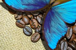 Coffee beans close up. Spicy blue butterfly Royalty Free Stock Photography