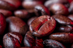 Coffee beans close up. A few coffee beans background, macrophtography Royalty Free Stock Image