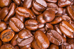 Coffee Beans Close-up. A close-up shot of some nice oily coffee beans Stock Image
