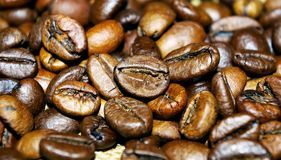 Coffee beans close up. Spicy Royalty Free Stock Image