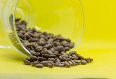Coffee beans close up wallpaper with yellow background studio. Coffee beans close up roasted as wallpaper with yellow background stock photography