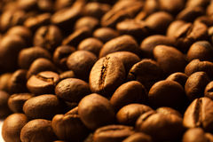 Coffee beans closeup background Royalty Free Stock Images