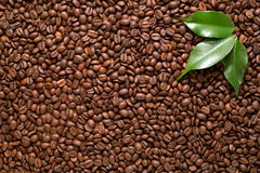 Coffee beans closeup background with green leaves Stock Photography