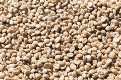 Coffee beans closeup background. green unroasted coffee beans. For design Stock Photography