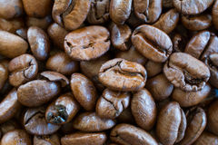 Coffee beans closeup Royalty Free Stock Image