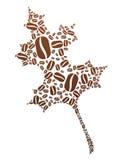 Coffee Bean Leaf Stock Photography