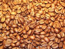 Coffee, Beans, Coffee Beans, Golden Stock Images