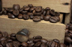 Coffee beans and coffee grinder Royalty Free Stock Photo