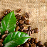 Coffee beans with coffee leaves Royalty Free Stock Photography