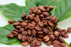Coffee Beans and Coffee Plant Stock Photos