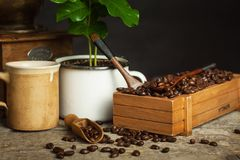 Coffee beans and coffee seedlings. Coffee trading. Crop production. Advertising the cafe. Royalty Free Stock Image