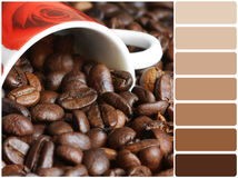 Coffee beans with color palette. Color palette series: shades of brown stock photo