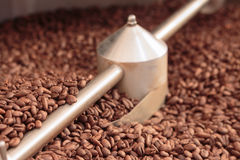 Coffee beans in a cooler Stock Images
