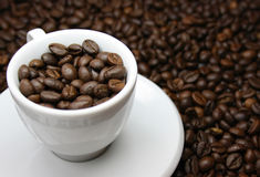 Coffee beans in a cup. Coffee beans in a white cup Stock Photography