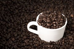 Coffee Beans in Cup Royalty Free Stock Photography
