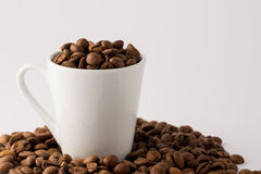 Coffee Beans in cup. Roasted brown coffee beans on white isolated background in small espresso coffee cup stock photo