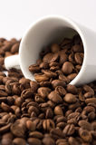 Coffee Beans in cup. Roasted brown coffee beans on white isolated background in small espresso coffee cup royalty free stock photography