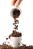 Coffee Beans in cup. Roasted brown coffee beans on white isolated background in small espresso coffee cup stock photos