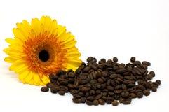 Coffee beans and daisy Stock Photos