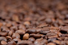 Coffee beans detail Stock Photos