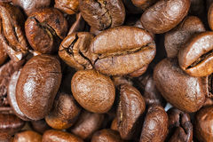 Coffee Beans Detail Stock Photos