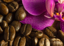 Coffee beans detail and orchid. Stock Image