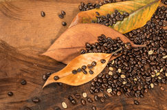 Coffee beans with dry leaves of magnolia Stock Images