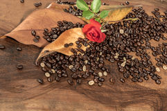 Coffee beans with dry leaves of magnolia and red rose. Royalty Free Stock Photography