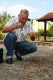 Coffee beans drying on the floor in Cuba`s National Park Altipla stock images