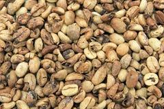Coffee beans drying, near El Jardin, Antioquia, Colombia stock image