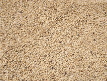Coffee beans drying in the sun Royalty Free Stock Images