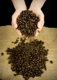 Coffee beans falling from hands Royalty Free Stock Images