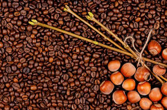 Coffee beans and filberts. Closeup of coffee beans and filberts - top view Stock Photos