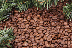 Coffee beans and fir branches. Is background Royalty Free Stock Photography